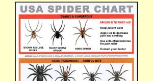 FREE USA Spider Identification Chart