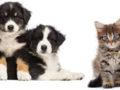 FREE Pet Gear