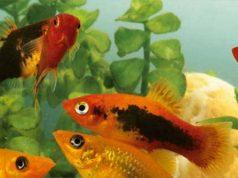 FREE Sample of Aquarium Munster Dr. Bassleer Biofish-Food