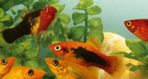 FREE Sample of Aquarium Munster Dr. Bassleer Biofish-Food