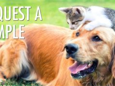 FREE Samples of Canidae Dog or Cat Food
